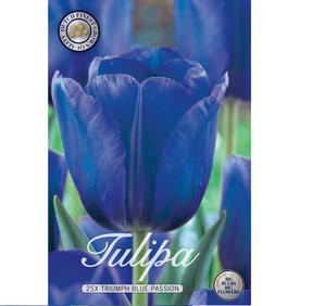 25-p BLUE PASSION tulpanlökar